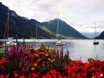 Blumen am Achensee