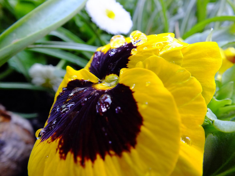 Blumen am Frühlingsmorgen