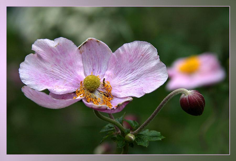 Blumen am Morgen