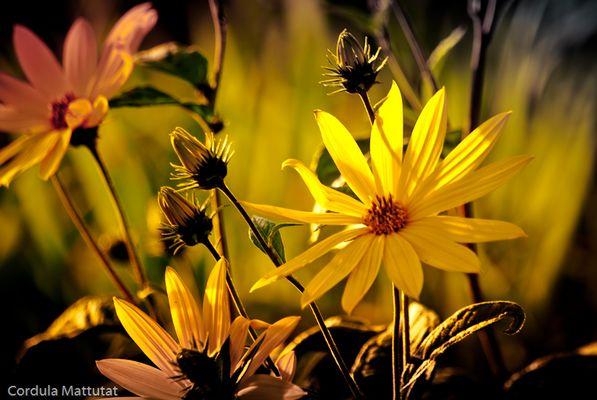 Blumen am Rheinufer