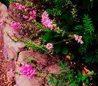 Blumen  am Weg entlang
