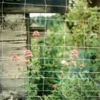 Blumen am Zaun