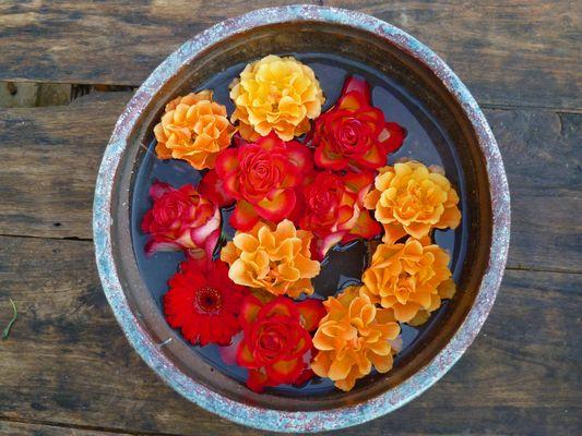 Blumen an Schale auf Wasserbett ;-)