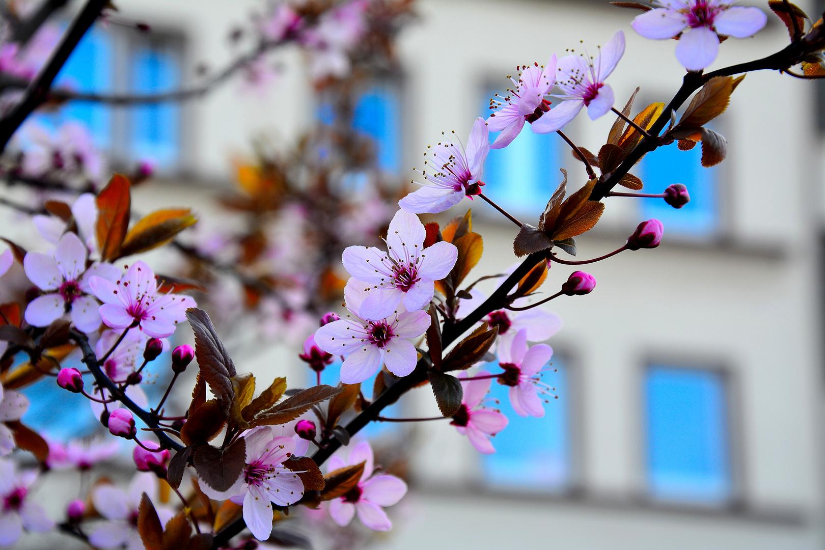Blumen ast