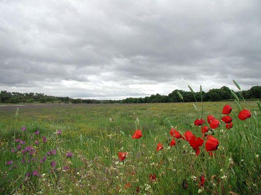Blumen auf dem Feld im Alentejo!