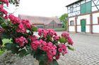 Blumen auf dem Schlossgelände