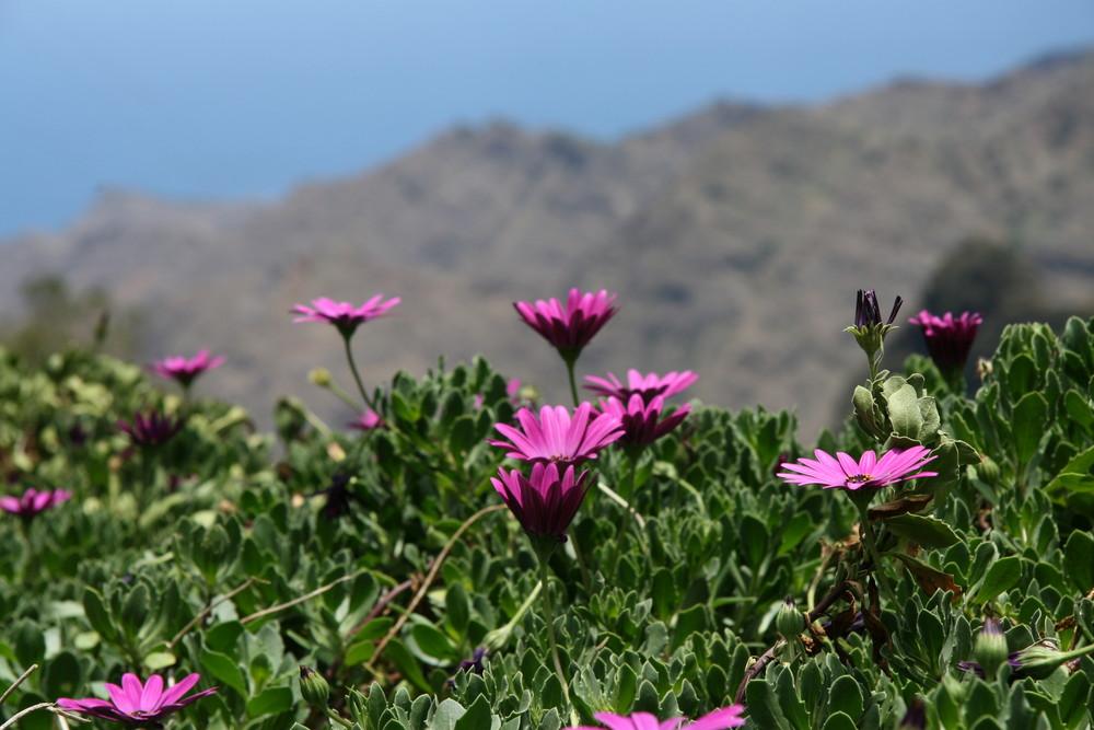 Blumen auf La Gomera
