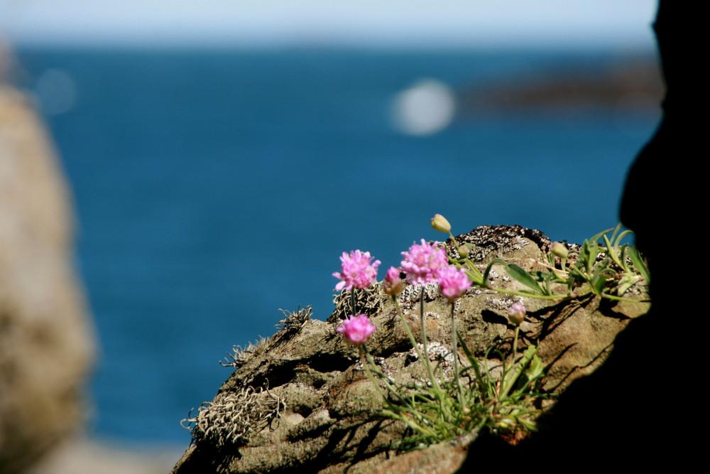 Blumen auf norwegischem Fels I