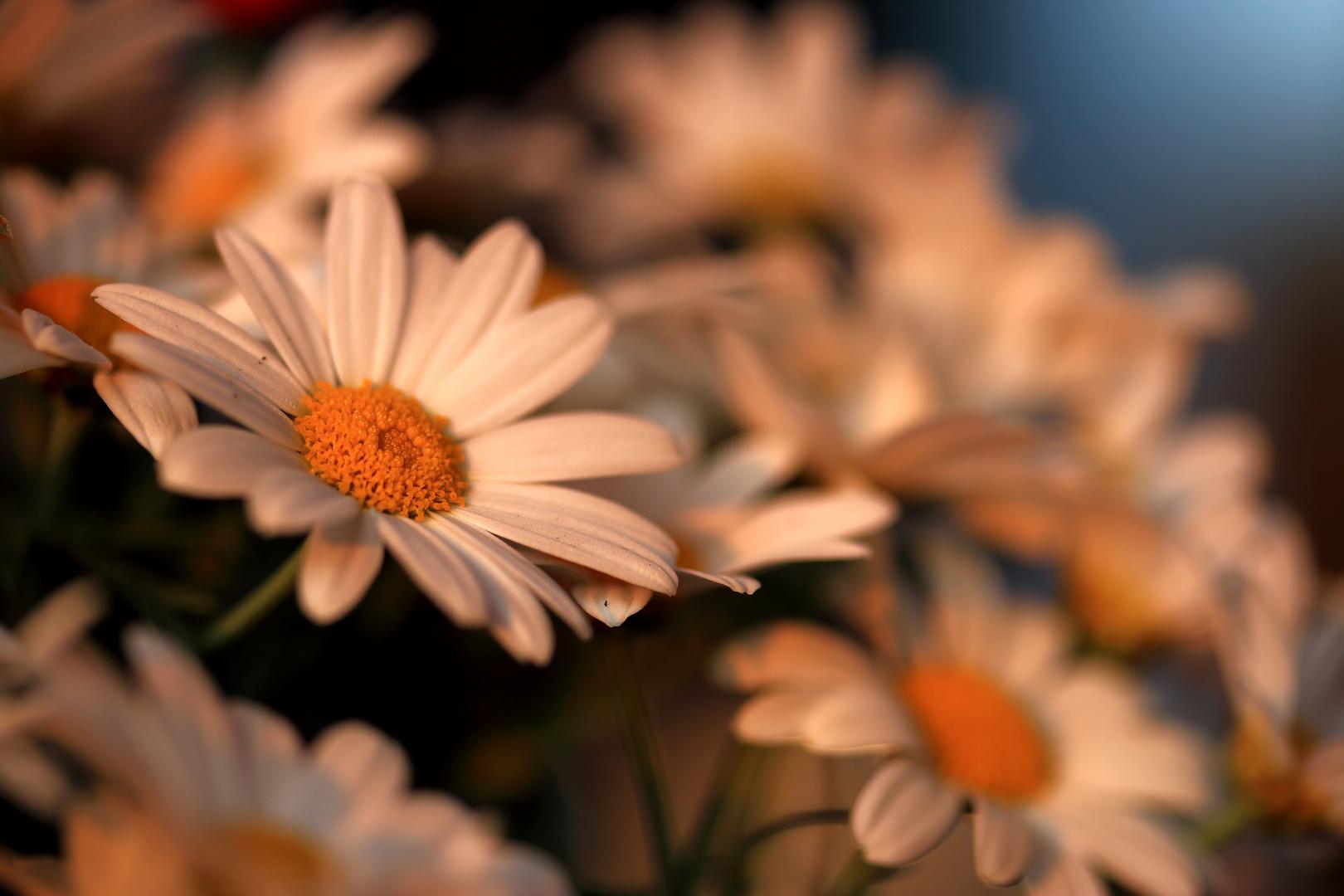 Blumen auf unserer Tereasse
