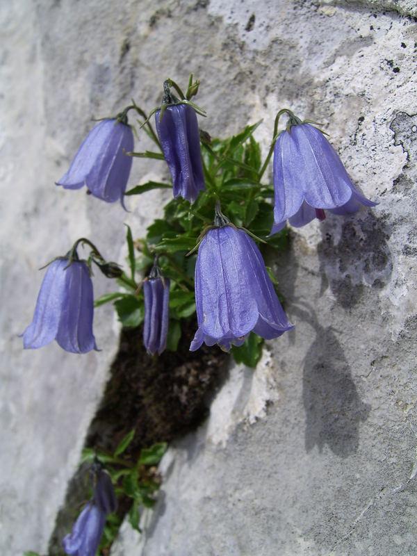 Blumen aus dem Stein