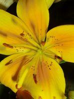 Blumen - aus einem bunten Blumenstrauß