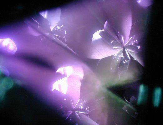 Blumen aus Glas II