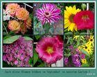 Blumen aus unserem Garten !