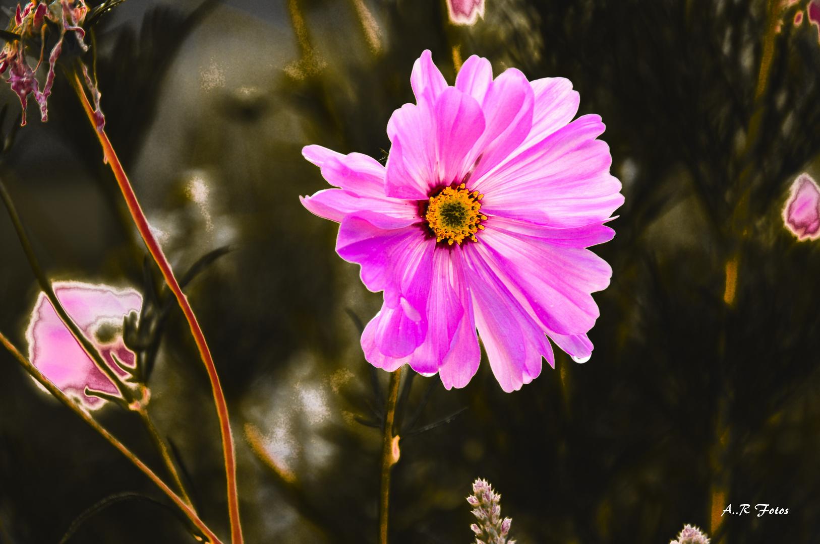 Blumen Bea
