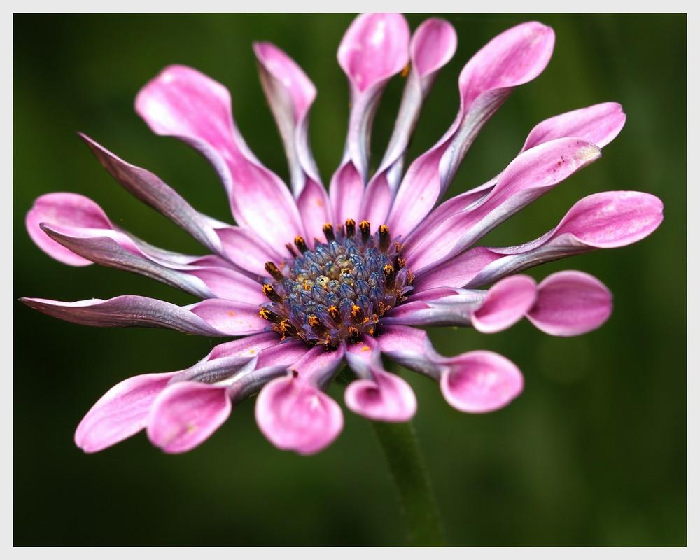 Blumen Blueten Sonnenschein