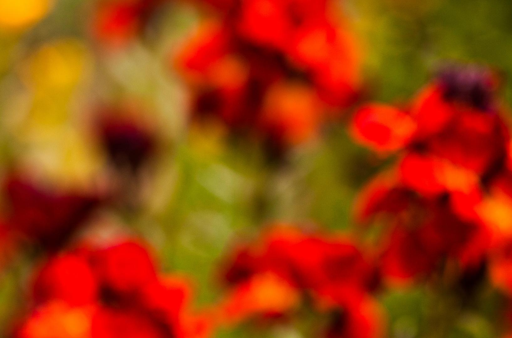 Blumen-Bokeh