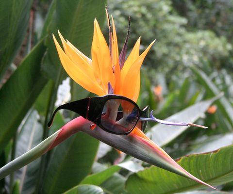 Blumen-Brillen-Vogel