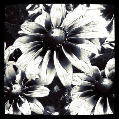 Blumen B/W