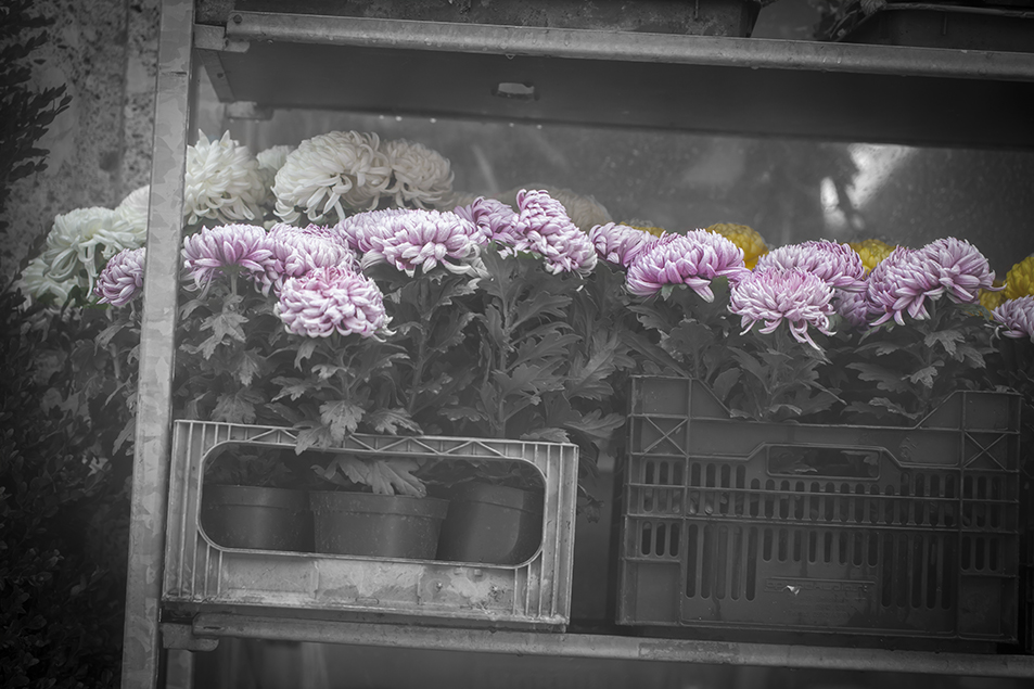 Blumen ...