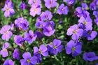 Blumen :D