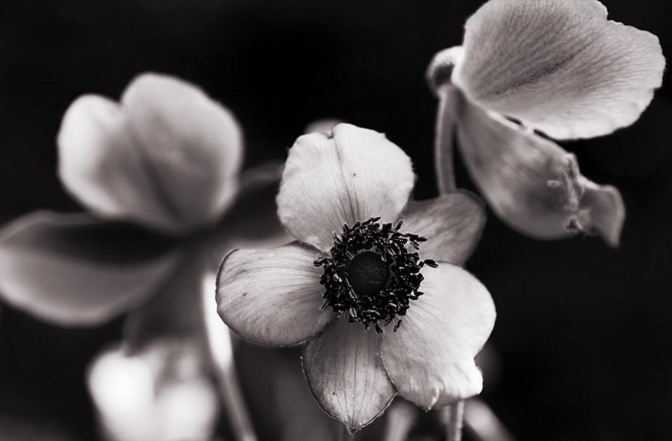 Blumen, das Lächeln der Erde