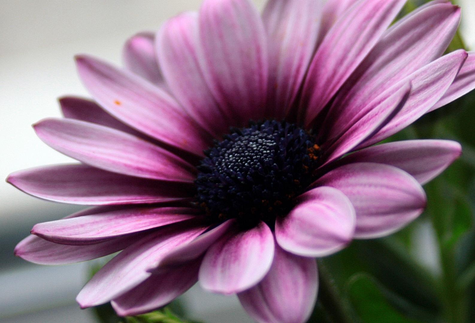 *** Blumen, das Lächeln der Erde ***