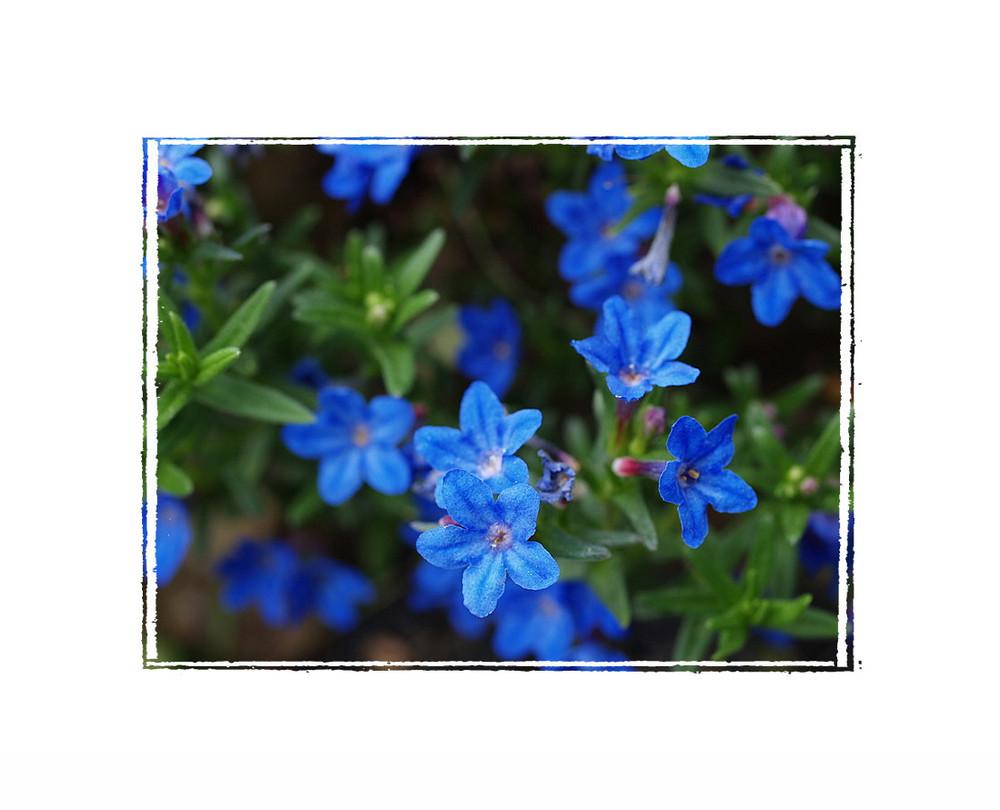 Blumen der Hoffnung