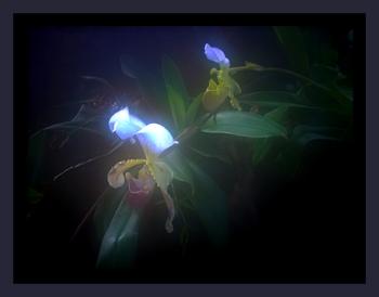 Blumen der Nacht