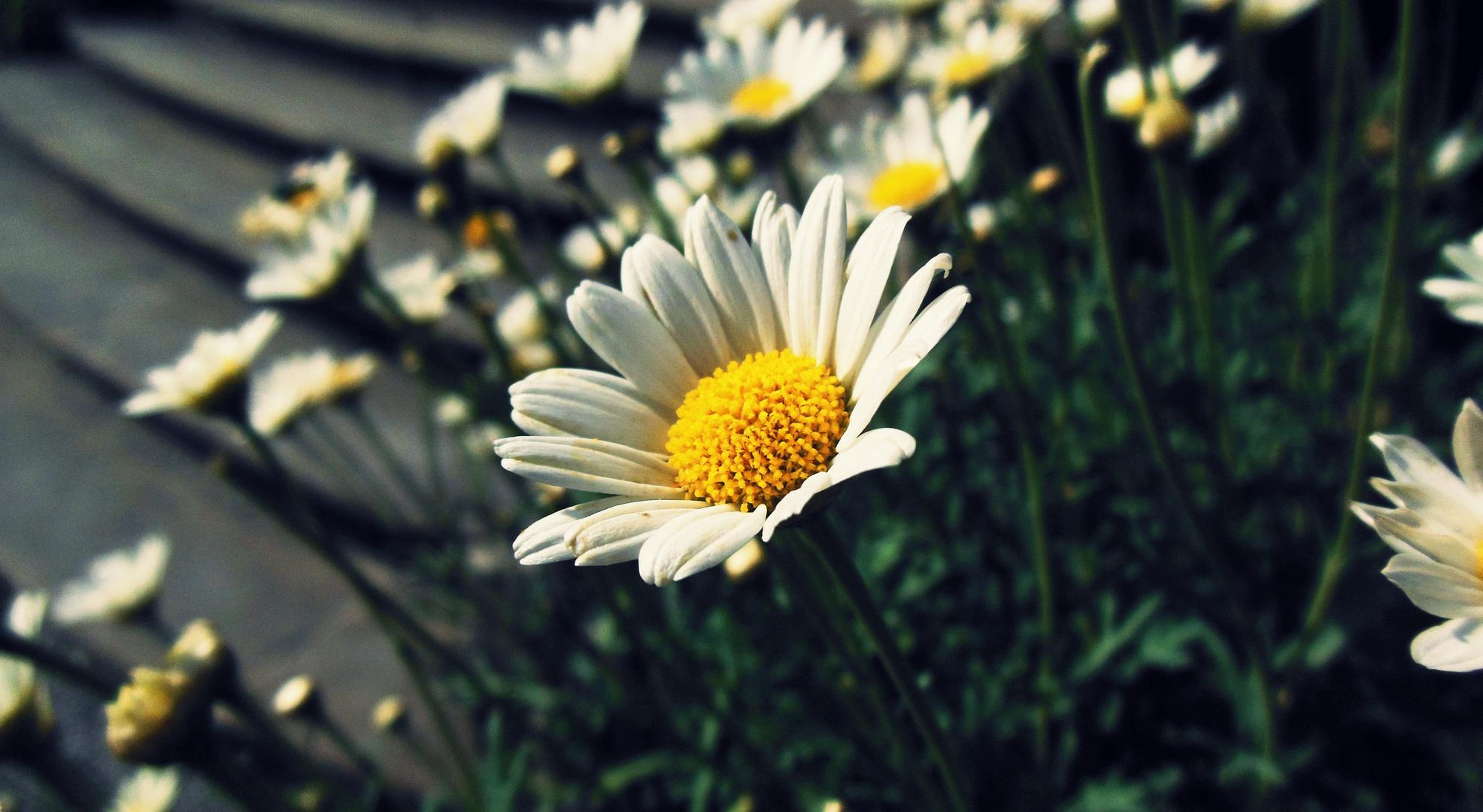 Blumen des vergangenen Sommers
