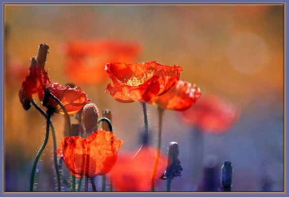 Blumen .....die ich mag