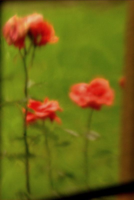 Blumen durchs Glas