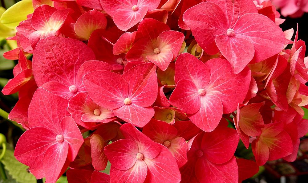 """. . """"Blumen, . . eine Menge,"""". ."""