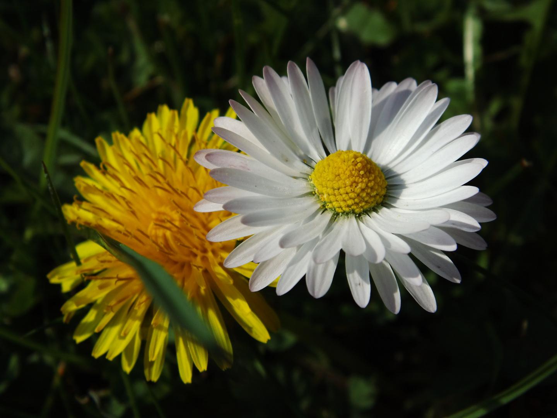 Blumen-Freunde