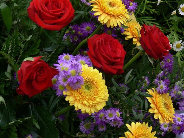 Blumen für Anna (10.6.10)