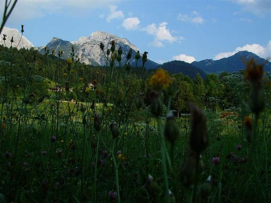 Blumen für den Berg