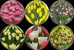 Blumen für Dich .........