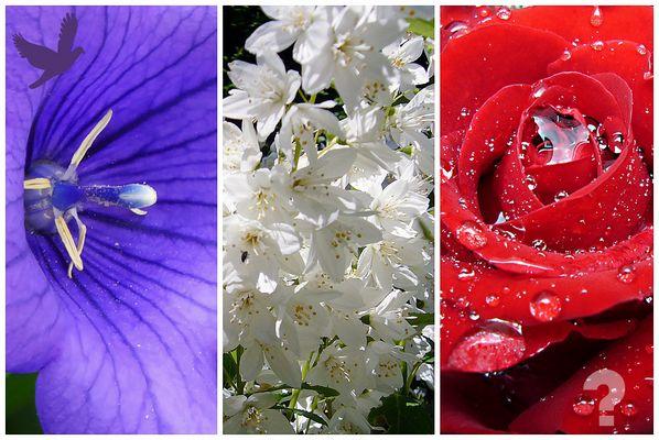 Blumen für die Opfer