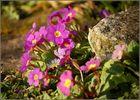 Blumen für Helmut