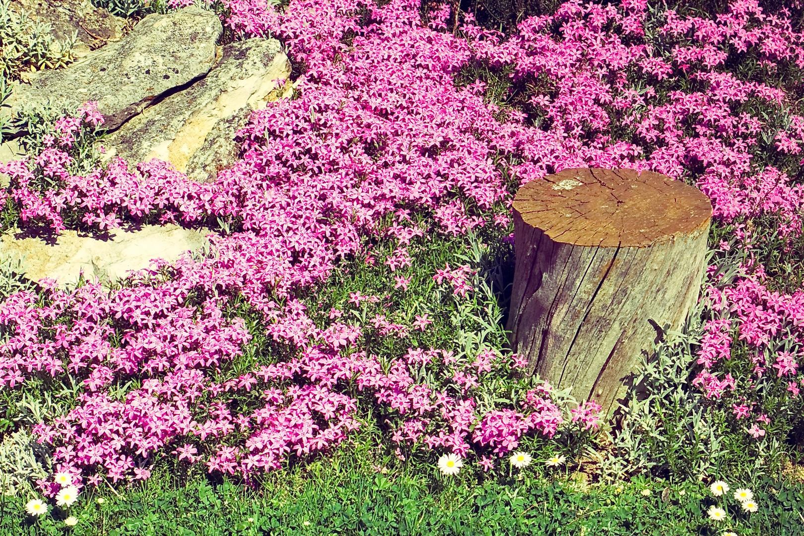 Blumen Gartenschmuck