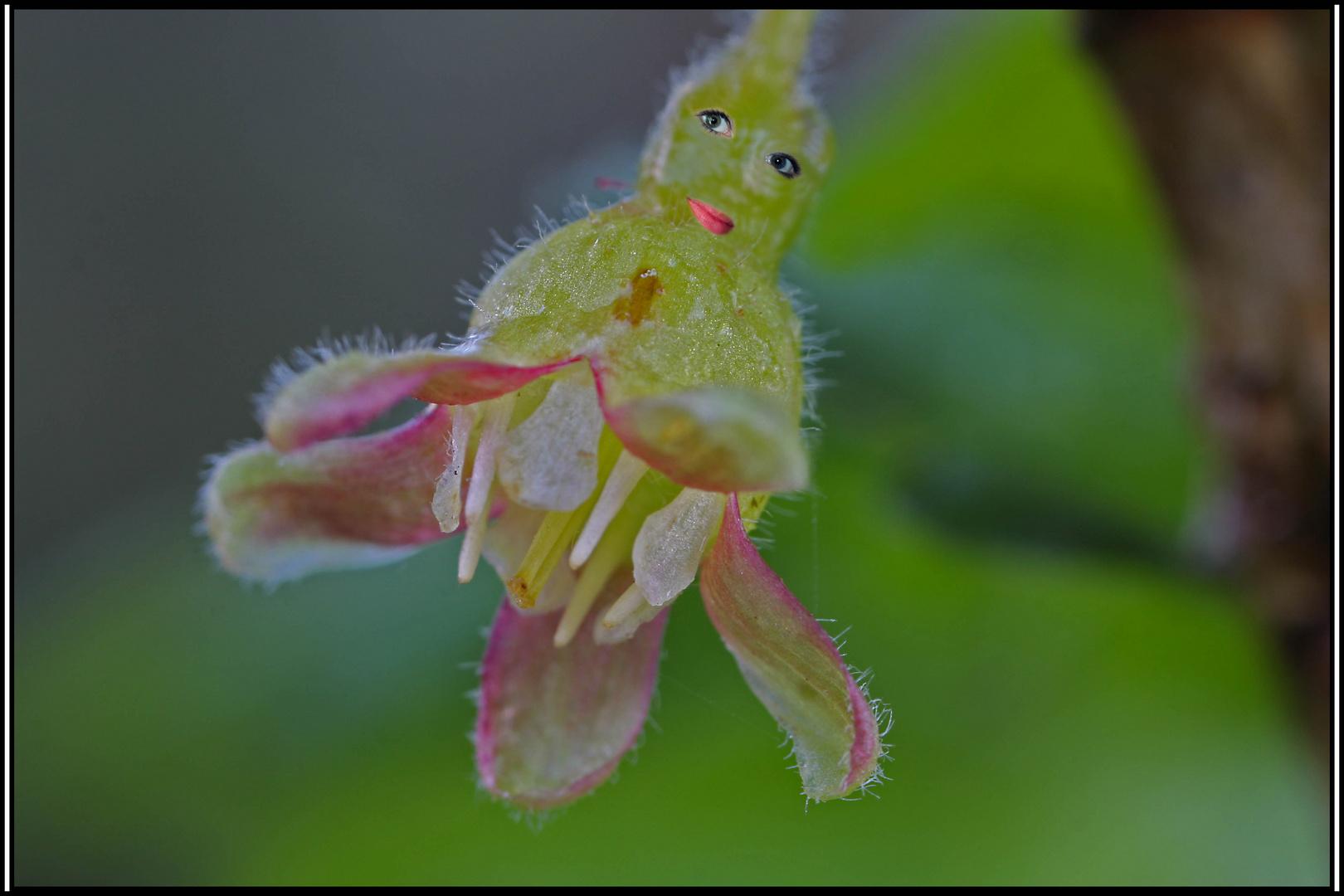 Blumen-Girl