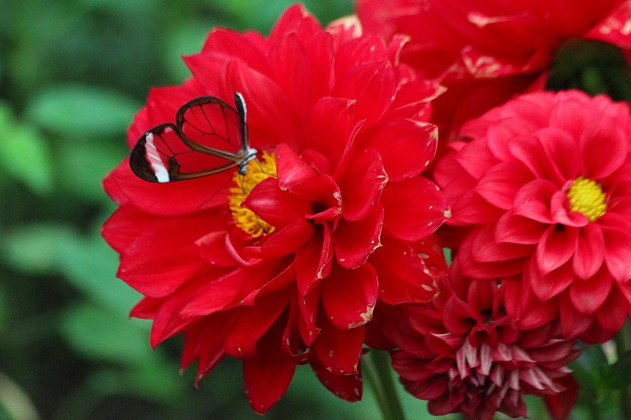 Blumen Grüße mit Schmetterling