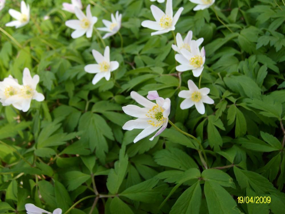 Blumen halt :)
