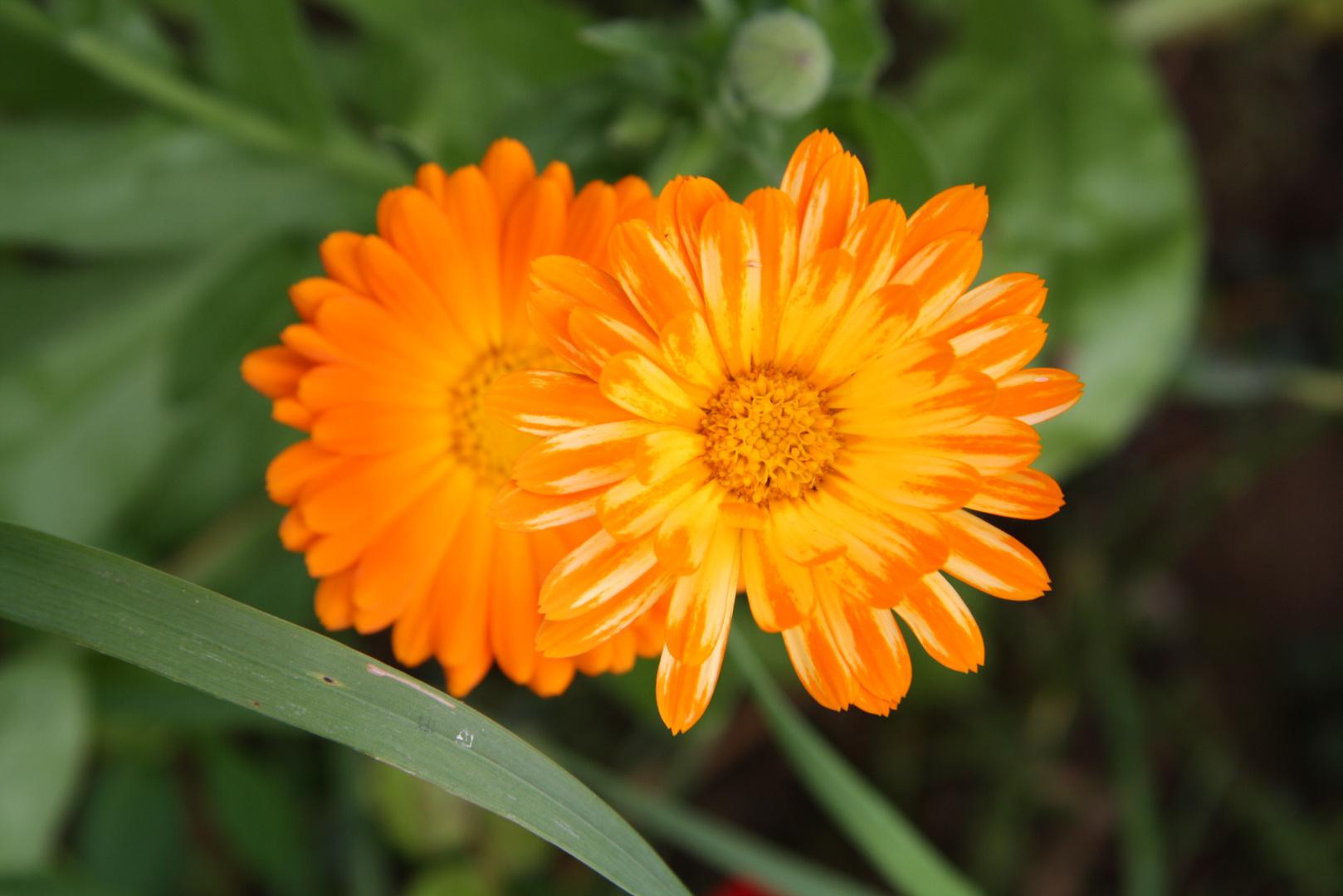 Blumen halt ;-)