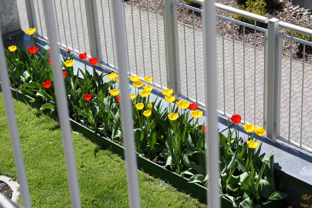 Blumen hinter Gittern