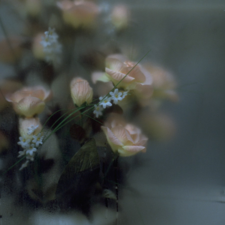 Blumen hinter Glas