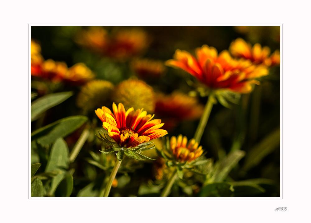 Blumen im Garten VII