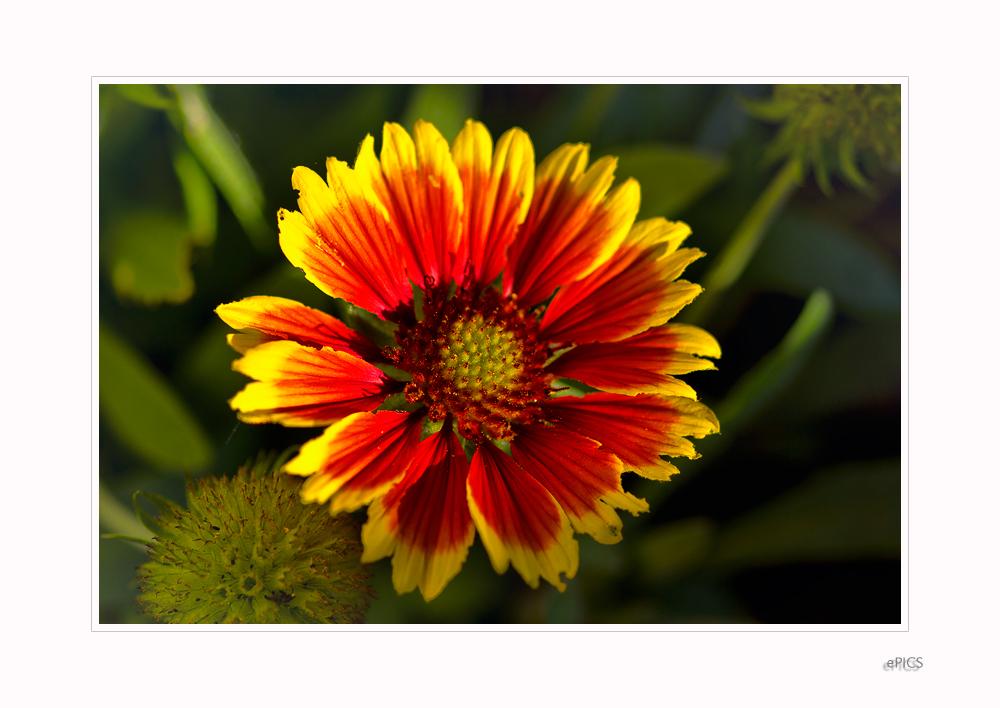 Blumen im Garten VIII