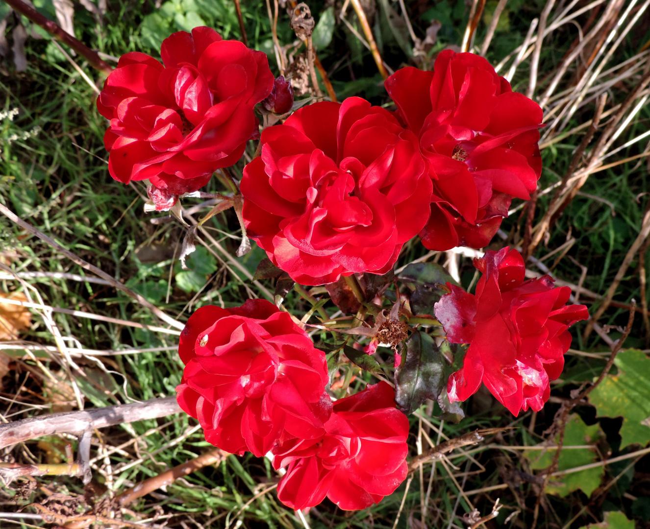 Blumen im gestrüpt