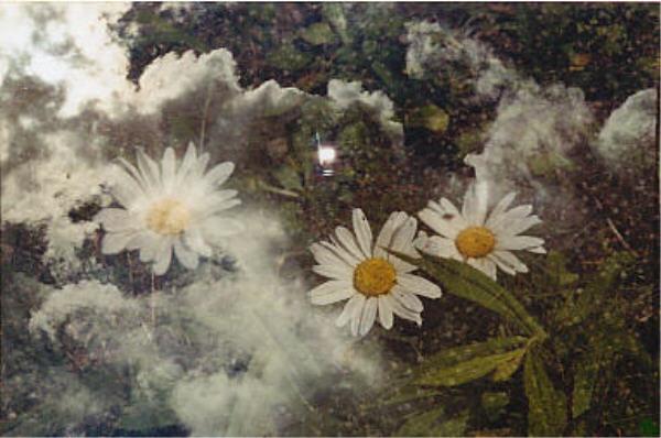 Blumen im Himmel