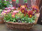 Blumen im Kindergarten